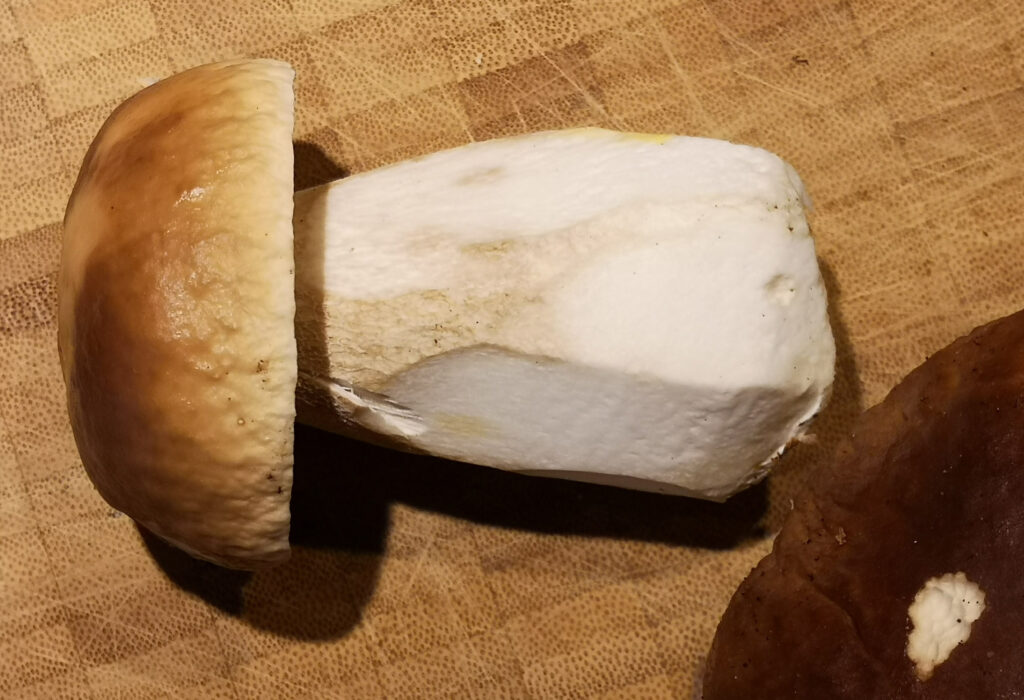 Der geputzte Steinpilz